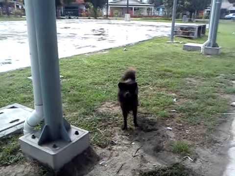 Dog pee everywhere