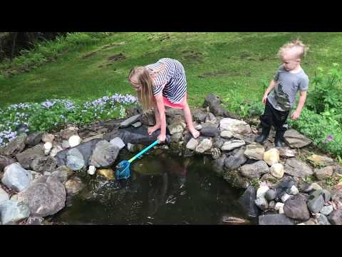 Catching frogs at the Pond