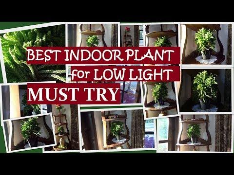 Best Indoor Plant For Low Light