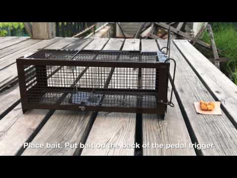 How to use the  RatsFatz Humane Live Rat Trap Cage to catch mouse with highly effective