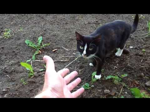 Wise cat sniffing man hand