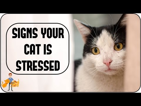 Is Your Cat Stressed?  (causes + simple signs to look for)