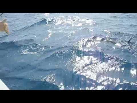 Ron Catches a Sailfish - Marathon, Fl - Top Notch Sport Fishing