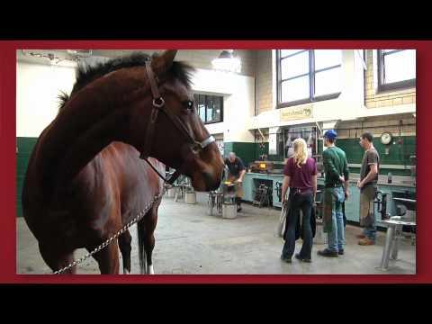 Forward thinking: Cornell Veterinary Medicine