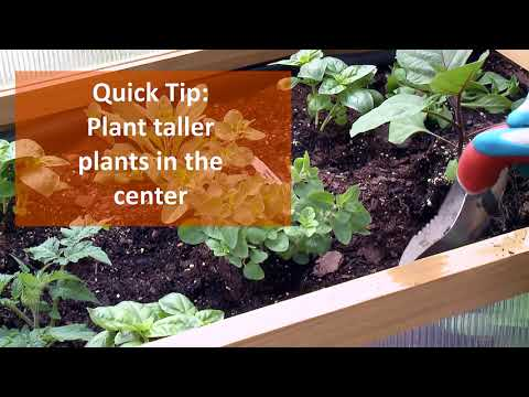 How to Plant a Pizza Garden in an Elevated Bed
