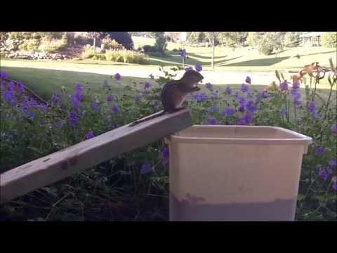 Ground Squirrel Problem Solved