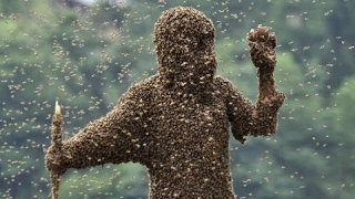 Download Killer Bees - Scary Bee Documentary (Earth Documentaries) Video
