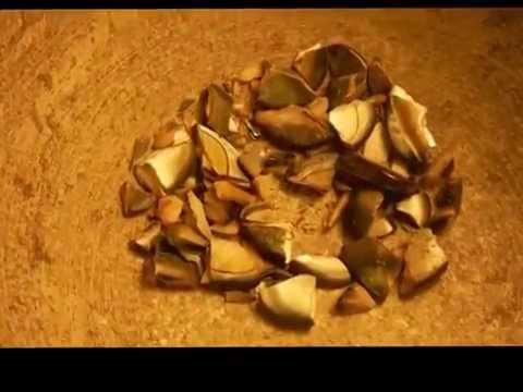 Crushed shell - Oval Mother of Pearl