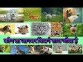 Animals maximum Life span |  kon sa janawar kitne saal jita he