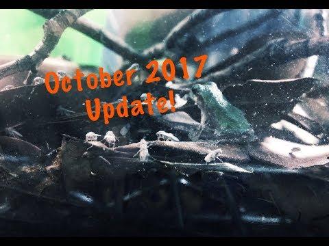 October 2017 Update & Room Tour
