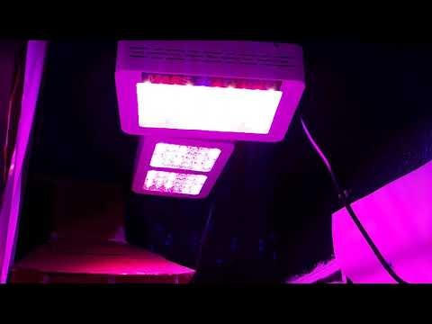 Rockpals 600W LED Grow Panel- Built In timer Function Demonstration