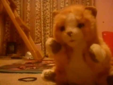 My cat puppet Tabitha