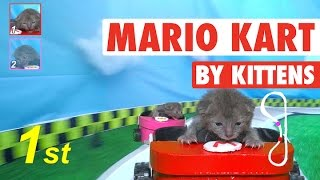 Mario Kart (By Kittens!) || Mario Kat