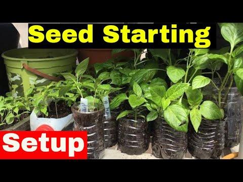 Seed Starting Setup (Seed Starting Greenhouse)
