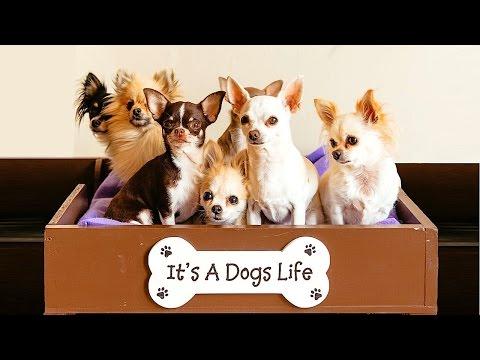 Instagram Pets: Cute Pups Rack Up 28,000 Online Followers