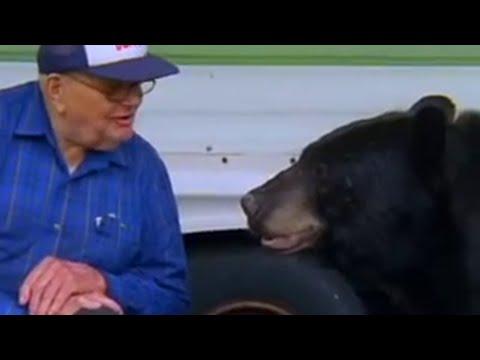 The man who feeds wild Black Bears - Bear Crime - BBC Animals