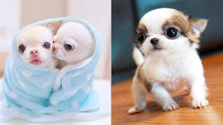 Baby Dogs - Cute and Funny Dog Videos Compilation #37 | Aww Animals