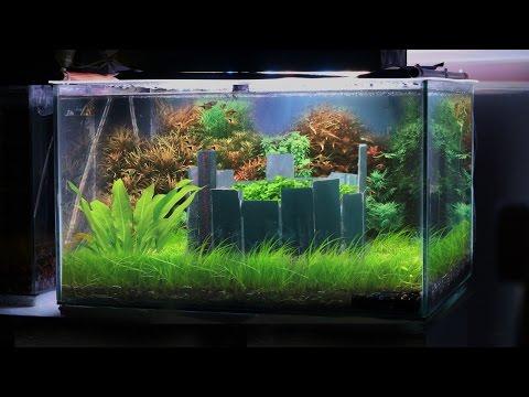 HOW TO: Building a LOW TECH Planted Aquarium | TonyTanks