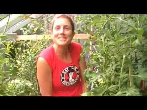 Jen's DWC Bubble Bucket Garden - year 2