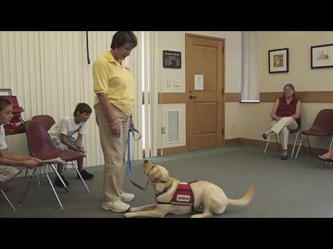 NEADS service dog demonstration at Gale Free Library