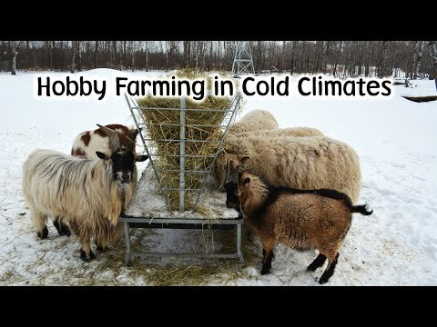 Hobby Farming in a Cold Climate