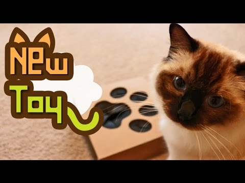Whack A Mouse - Cat Toy