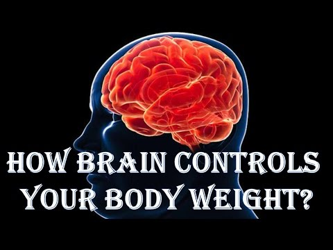 How Brain Controls Your Body Weight