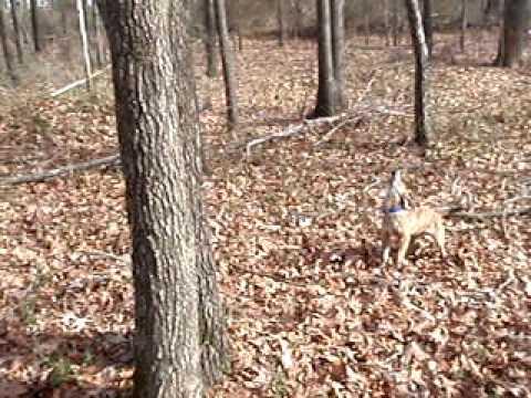 Mt. Cur Pup Squirrel Training