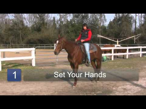 How to Train a Horse to Back Up in Saddle