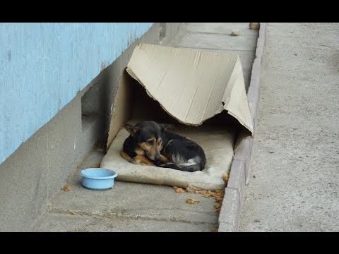 Homeless dog living in a cardboard box gets rescued & has a heartwarming transformation.
