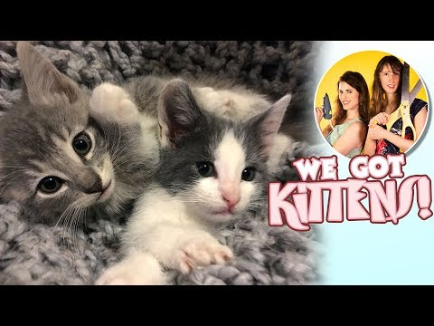 OMG We Just Got Kittens! | Meet Sitka and Willow
