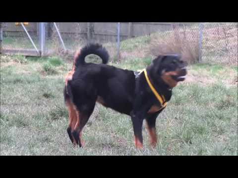 Dogs Trust Shrewsbury - Roxy