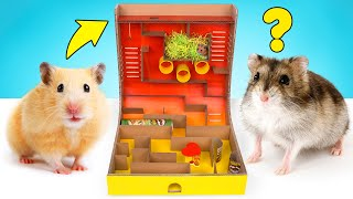 How To Make King-Of-The-Hill Cardboard Maze For Your Hamster 🐹👑