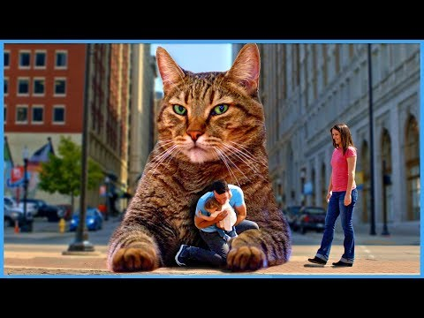 The BIG Mean Kitty Song - Official Music Video [KIDS SONGS]