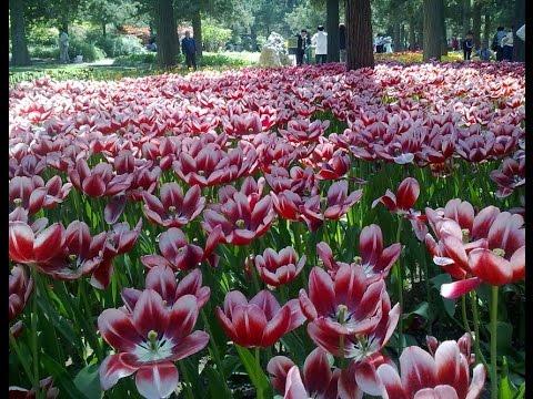 jingshan park in beijing China - summer palace beijing - China travel