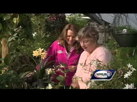 Grow it Green: Fragrance and houseplants