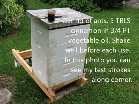 Using cinnamon/vegetable oil mixture to keep ants off bee hive
