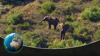 Wild Animals in South Africa: Rescue Centres along the Garden Route