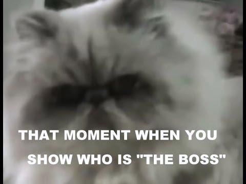Cat Boss - One Bad Cat
