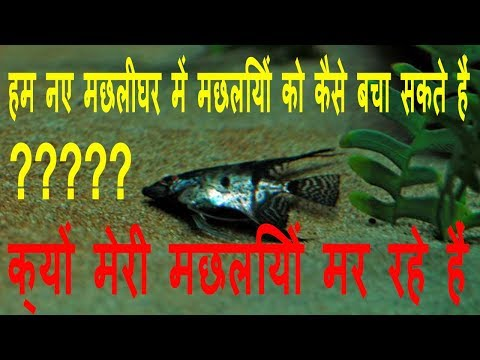 How to save your fishes from dying  in hindi || Petcare tips in hindi