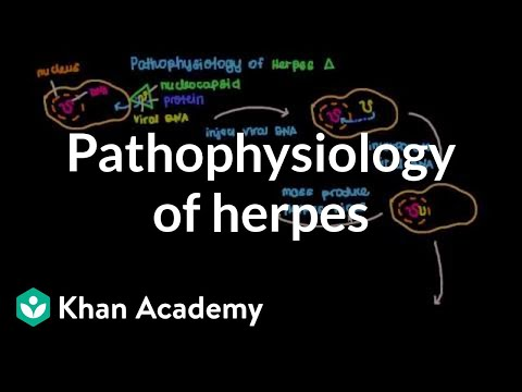 Pathophysiology of herpes | Infectious diseases | NCLEX-RN | Khan Academy