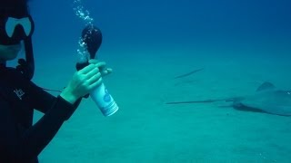 Freediving with balloons (Weird Science Experiment 4)