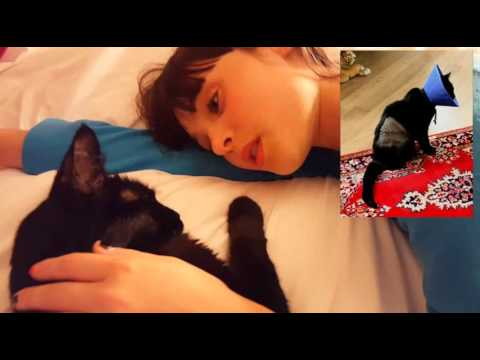 Young Girl Sings to Her Dying Cat