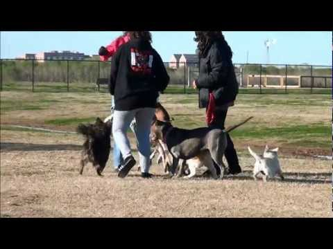 Chick gets bit and falls trying to stop dog fight!