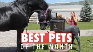 Best Pets of the Month August 2018