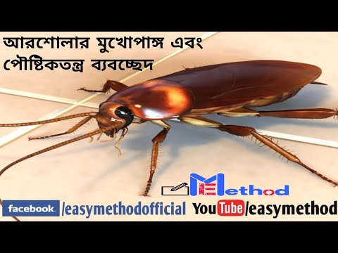 Dissection of Cockroach(americana)|Bio-practical|Class 11-12