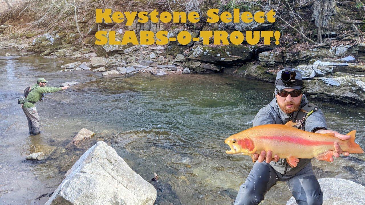Keystone Select PA Trout Fishing | BIG GOLDEN RAINBOWS!