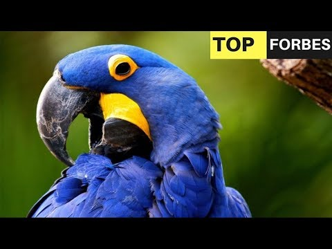 Top 10 Most Expensive Pets in The World 2017