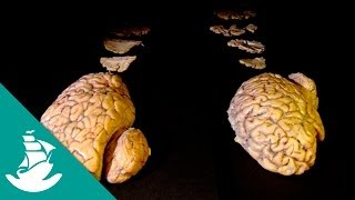 Brain, the last Enigma (full documentary)