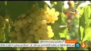 Iran Organic Grapes harvest, Urmia county برداشت انگور شهرستان اورميه ايران